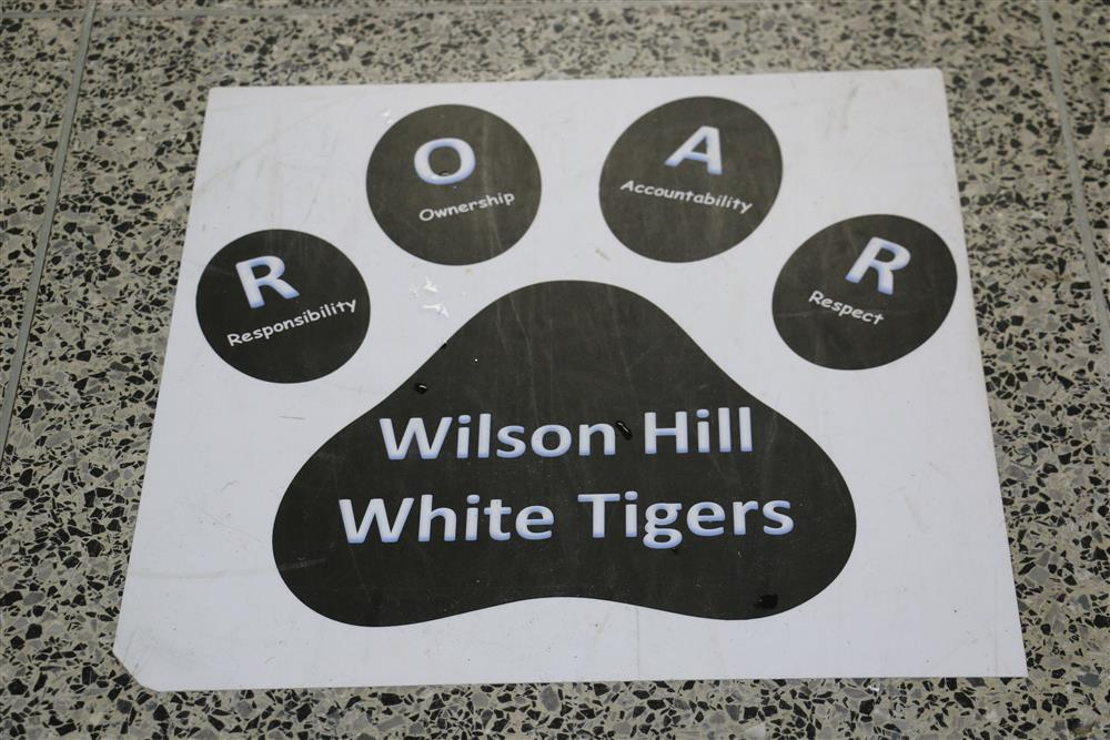Wilson Hill White Tiger Image