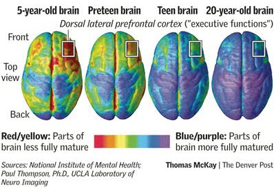 Development of the brain graphic